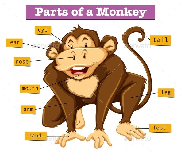 Diagram Showing Parts Of Monkey - Animals Characters