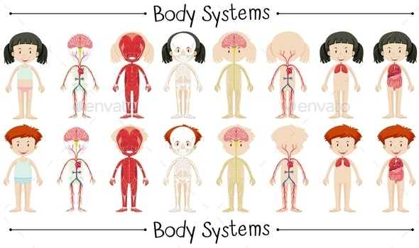 Body System Of Boy And Girl - People Characters