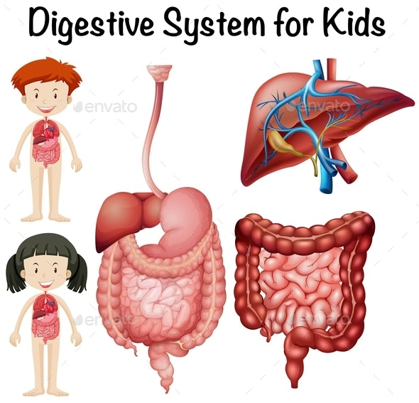 Digestive System For Kids - People Characters
