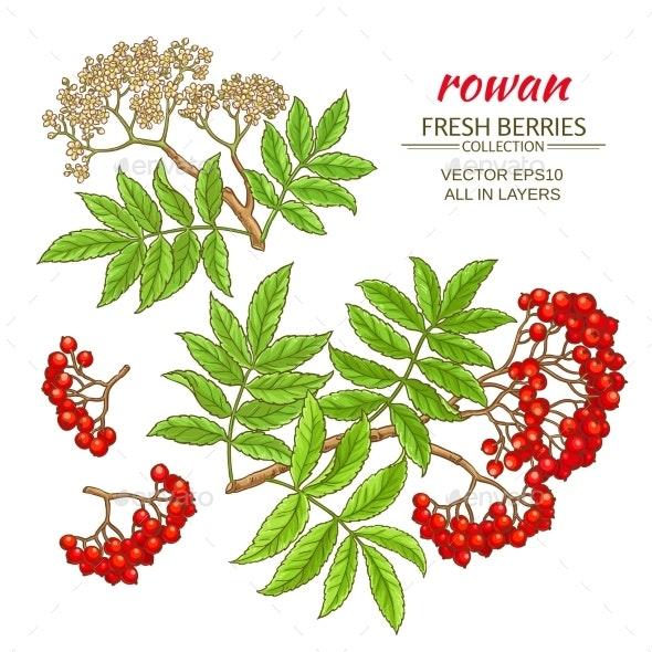 Rowan Vector Set - Health/Medicine Conceptual