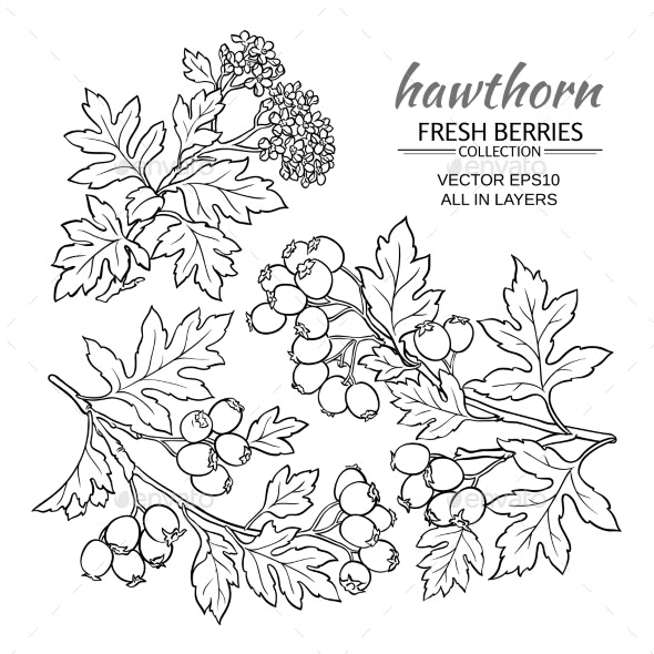 Hawthorn Vector  Set - Food Objects