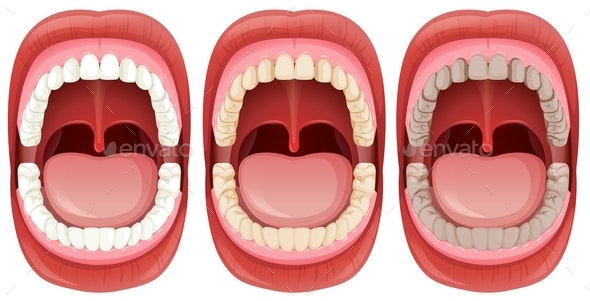A Set Of Human Mouth Anatomy - People Characters