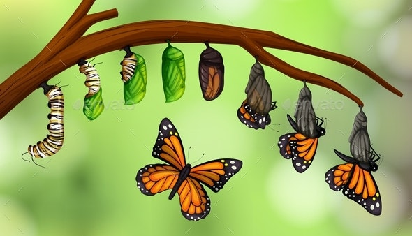 Science Butterfly Life Cycle - Animals Characters