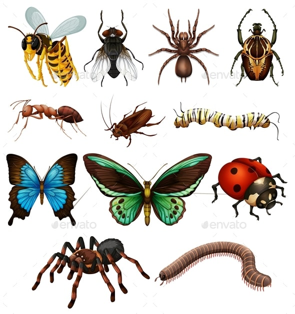 Set of Different Wild Insects - Animals Characters