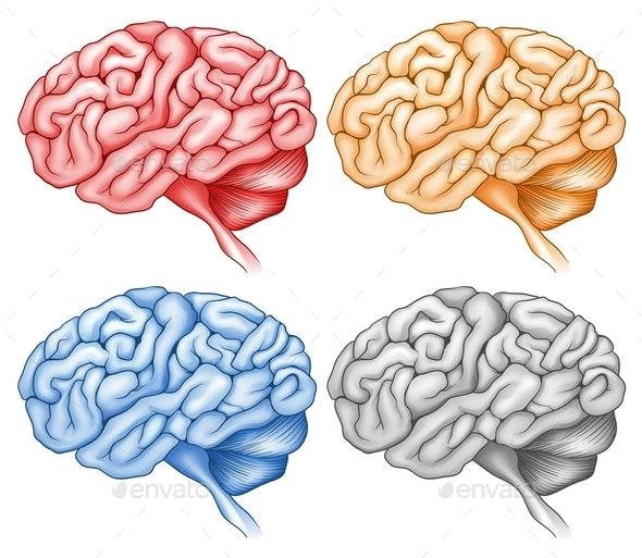 Human Brain In Four Colors - Health/Medicine Conceptual