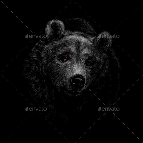 Portrait of a Brown Bear Head on a Black - Animals Characters