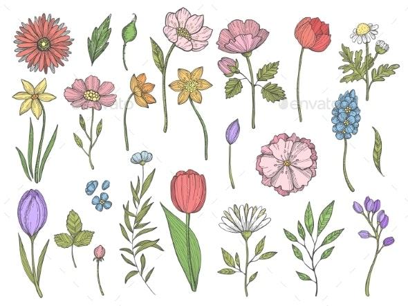 Colored Plants - Flowers & Plants Nature