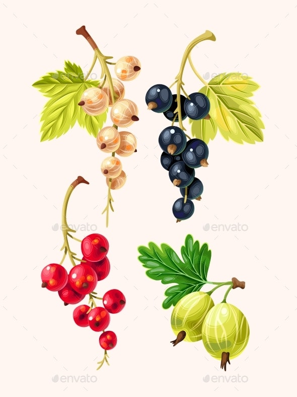 Vector Set of High Detailed Currant Berries - Food Objects