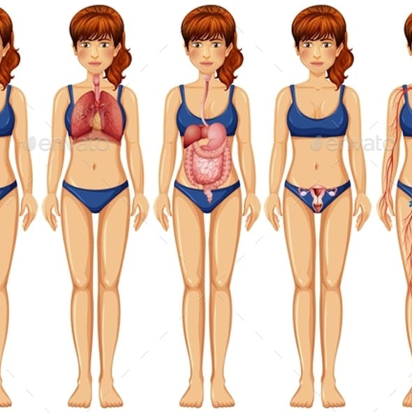 Woman Body And Anatomy