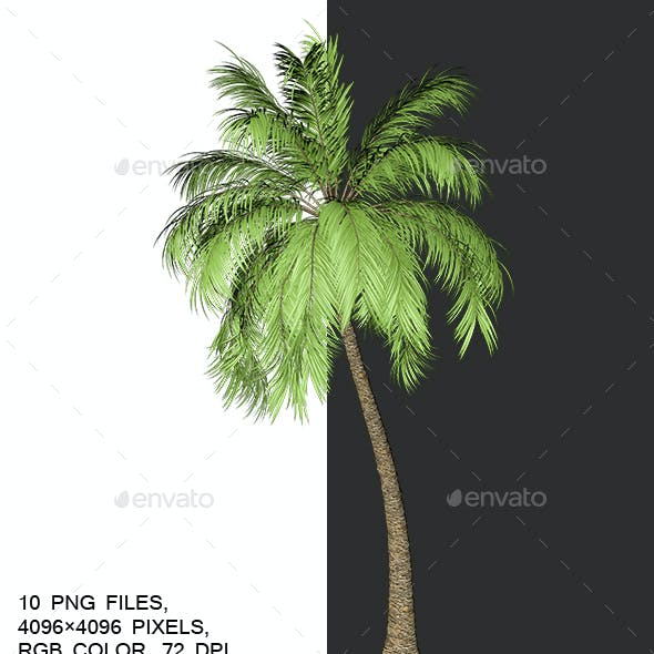 Packing Palm Trees With Alpha Channel