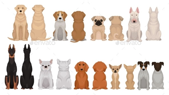 Set of Dogs of Different Breeds Front and Back - Animals Characters