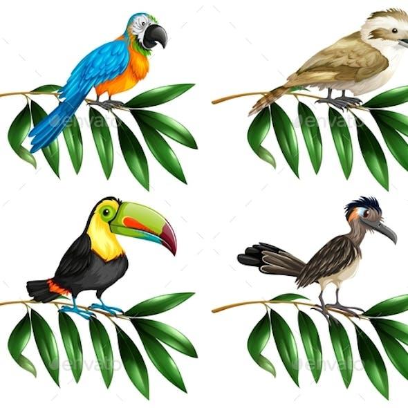 Four Types of Wild Birds on Branch
