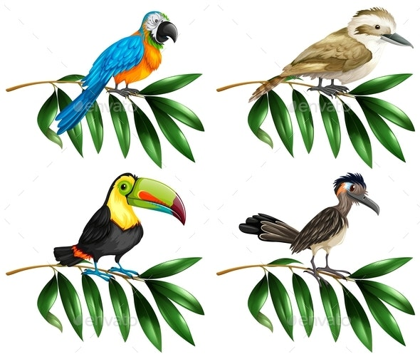 Four Types of Wild Birds on Branch - People Characters