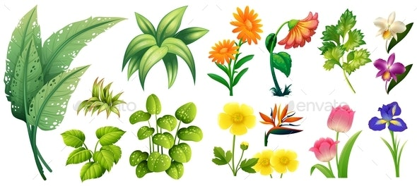 Different Types of Flowers and Leaves - Flowers & Plants Nature