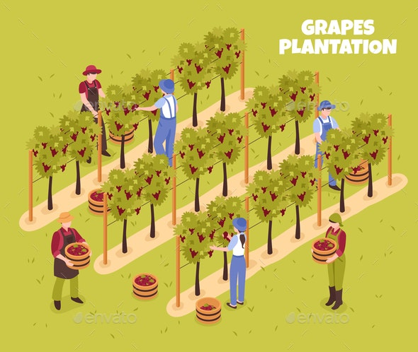 Grapes Plantation Isometric Illustration - Food Objects