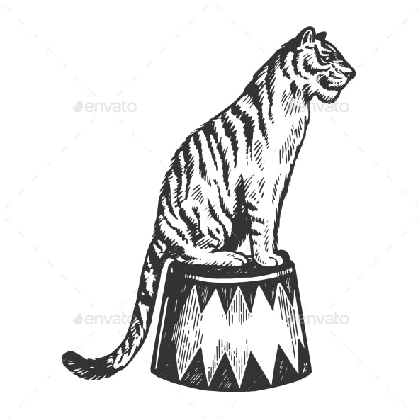Circus Tiger Animal Engraving Vector Illustration - Animals Characters