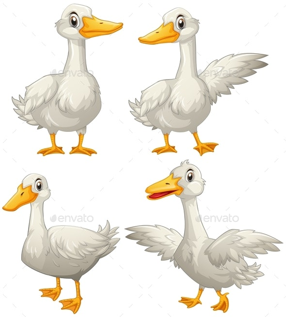 Duck In Four Different Actions - Animals Characters