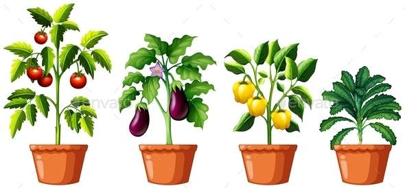Set Of Different Plants - Flowers & Plants Nature