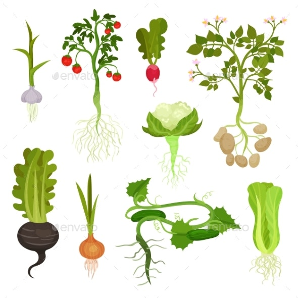 Flat Vector Set of Vegetables with Roots - Food Objects