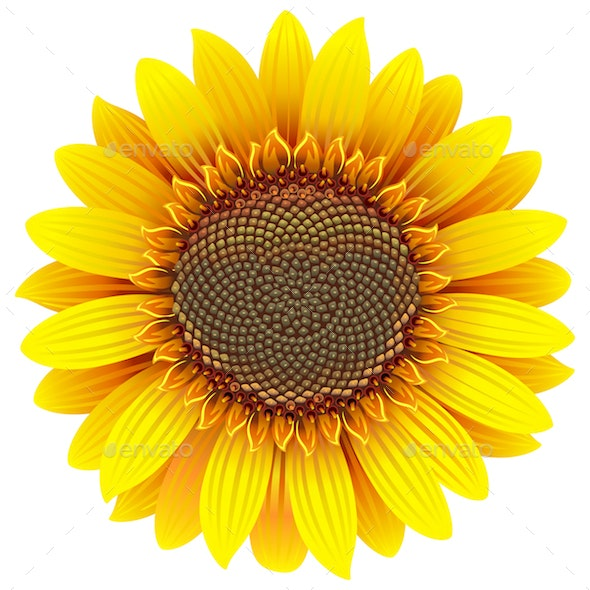 Vector Sunflower Icon - Flowers & Plants Nature