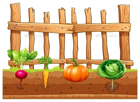 Set Of Different Vegetables - Organic Objects Objects