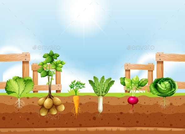 Set Of Different Vegetable Crop - Organic Objects Objects