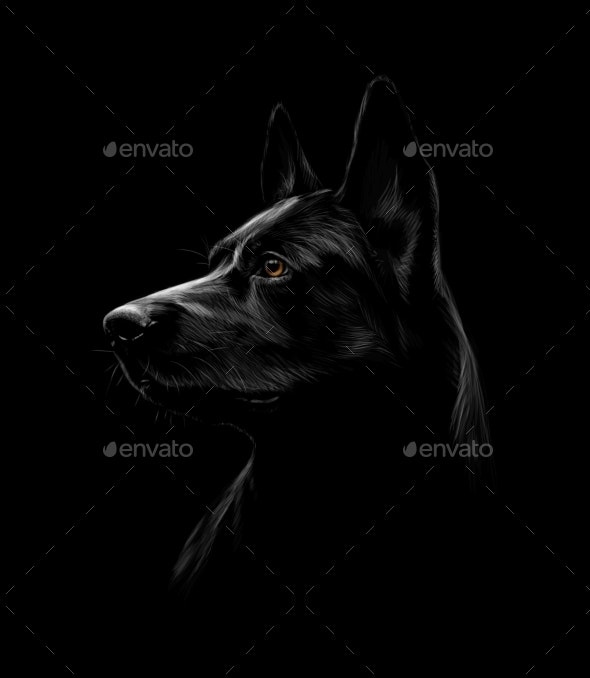 Portrait of a Black Shepherd Dog on Black - Animals Characters