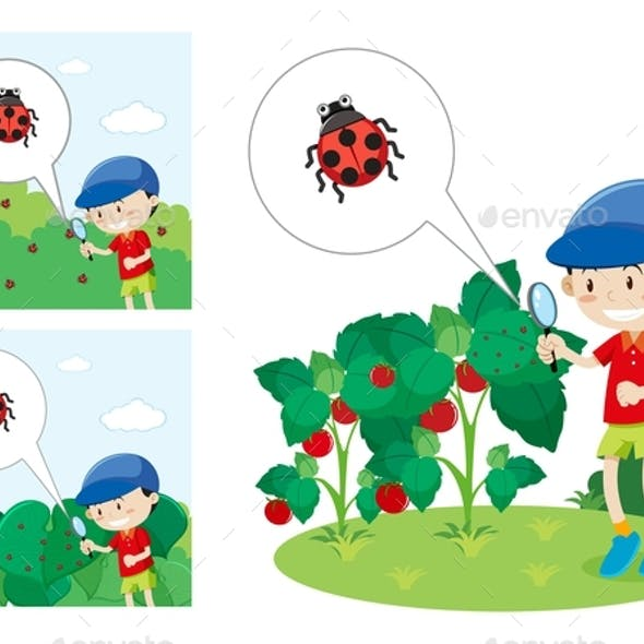 Boy With Magnified Glass Looking at a Lady Bug