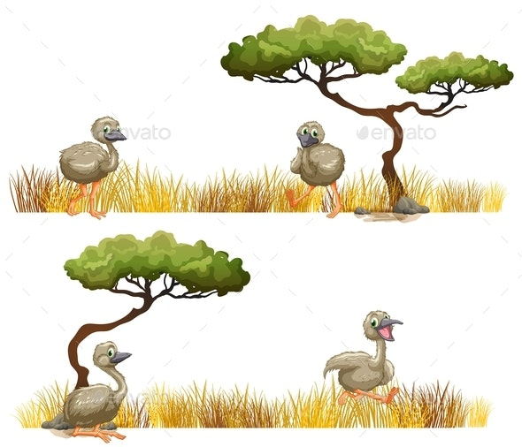 Ostriches Running in The Field - Animals Characters