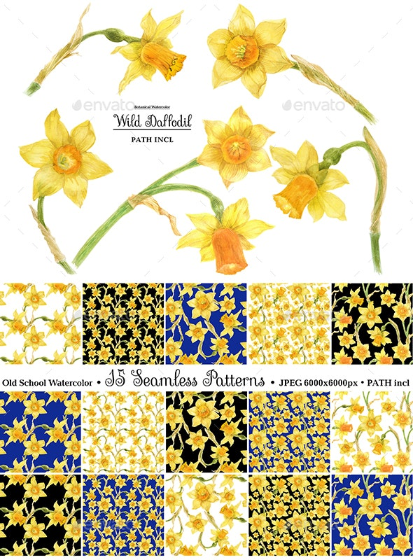 Watercolor Wild Daffodil - Nature Backgrounds