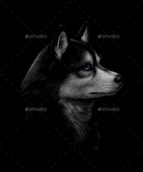 Portrait of the Head of the Siberian Husky - Animals Characters