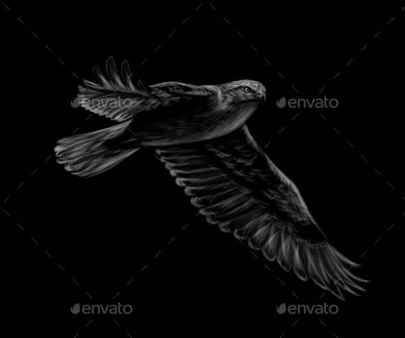 Portrait of a Flying Falcon on a Black Background - Animals Characters