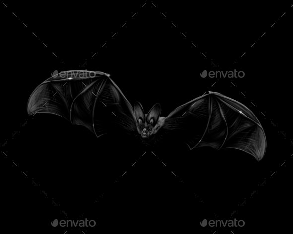 Portrait of a Bat in Flight on a Black Background - Animals Characters