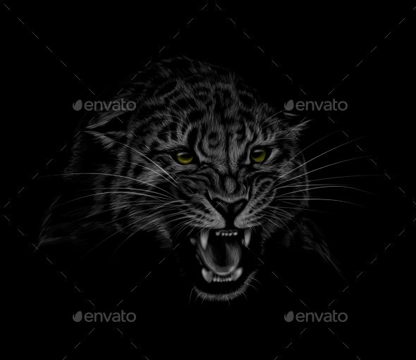 Portrait of a Leopard Head on a Black Background - Animals Characters