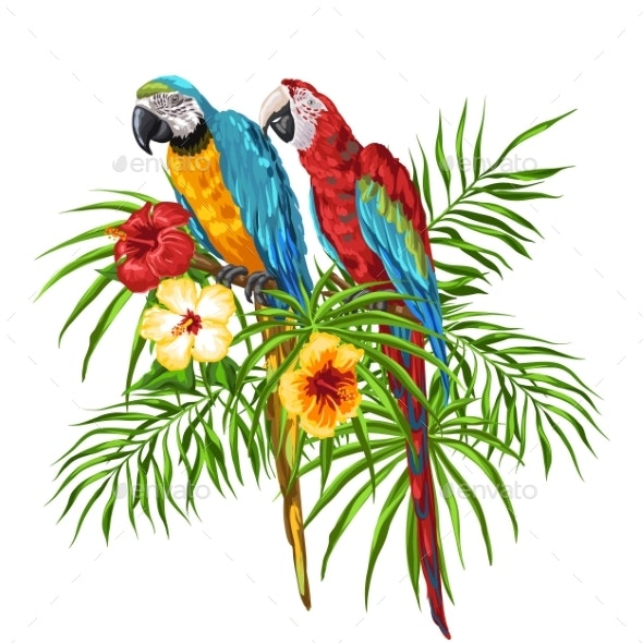Illustration of Macaw Parrots - Animals Characters