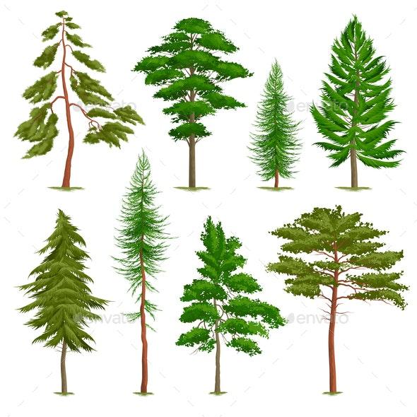 Realistic Pine Trees Set - Flowers & Plants Nature
