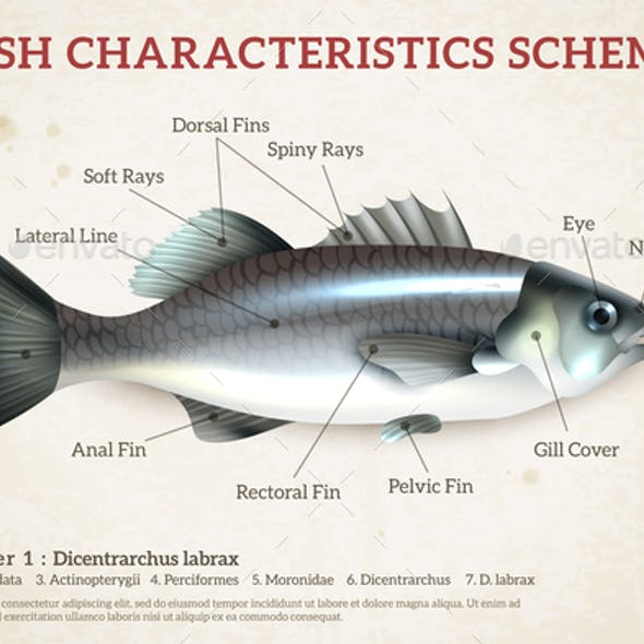 Fish Scheme Infographics