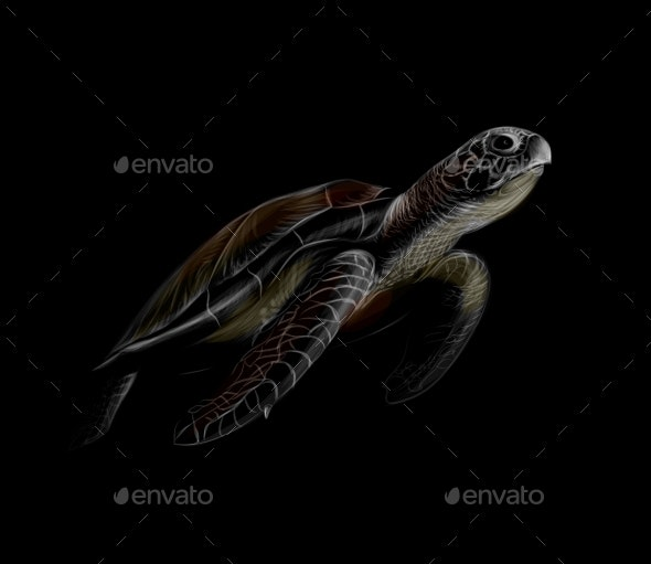 Portrait of a Sea Turtle on a Black Background - Animals Characters
