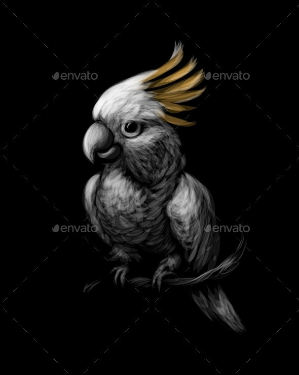 Cockatoo Parrot - Animals Characters