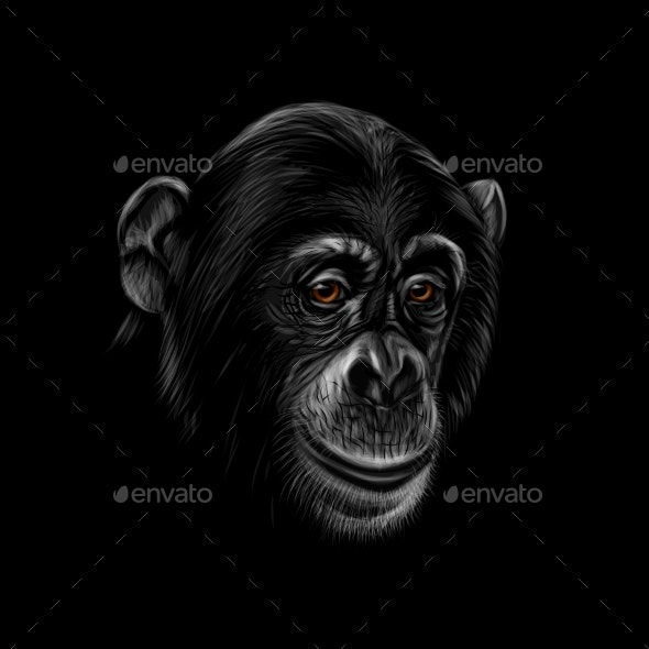Portrait of a Chimpanzee Head on a Black - Animals Characters