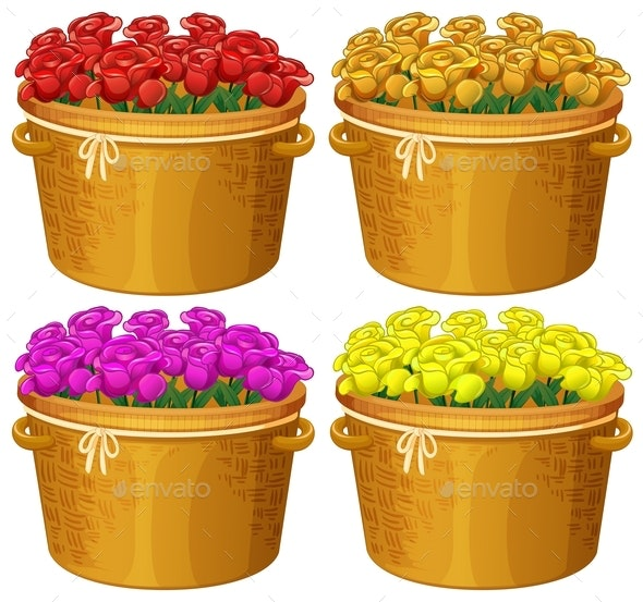Four Baskets Of Roses In Different Colors - Flowers & Plants Nature