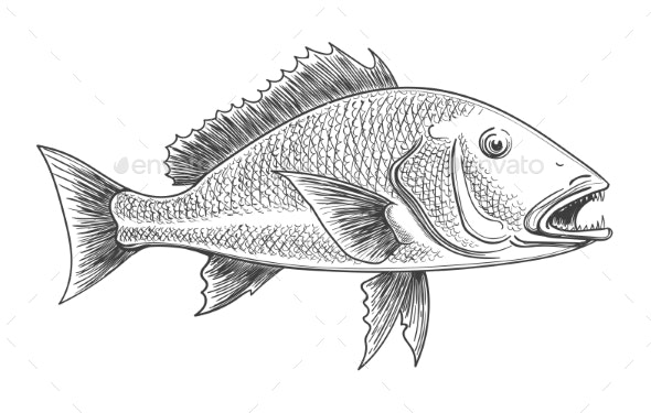 Fish Retro Ink Sketch - Animals Characters