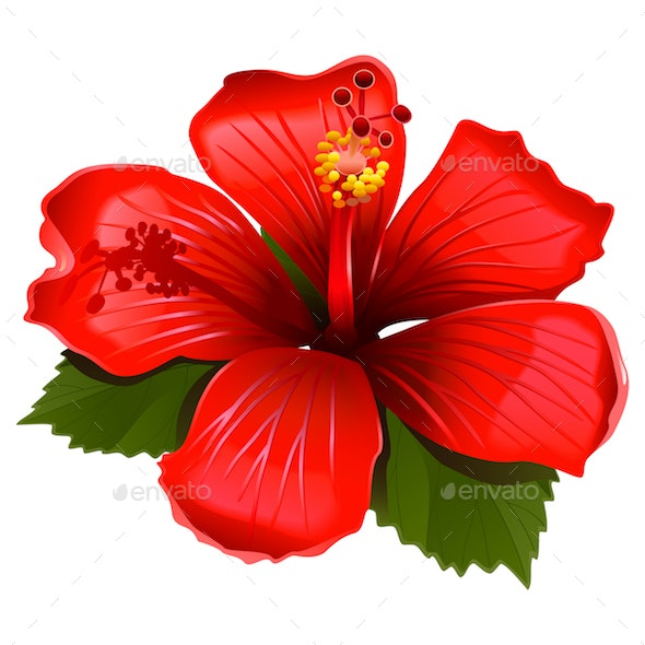 Vector Red Hibiscus Icon - Flowers & Plants Nature