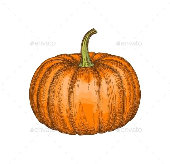 Ink Sketch of Pumpkin - Food Objects