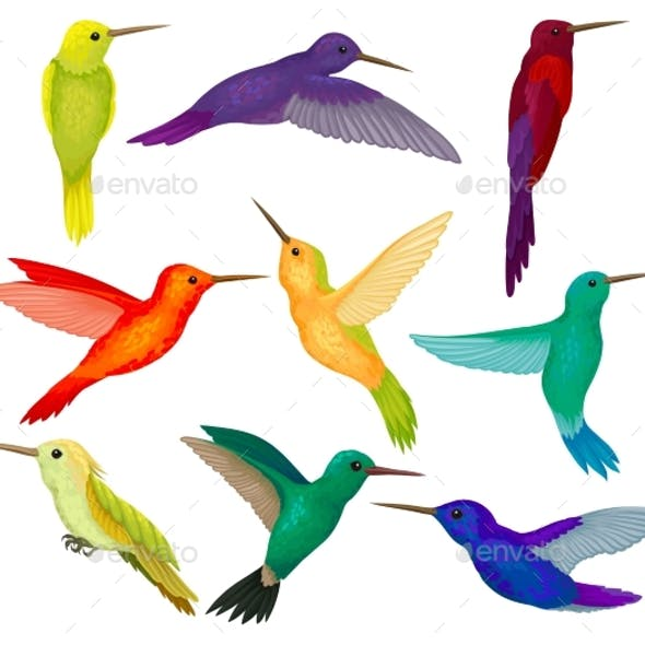 Hummingbirds Set