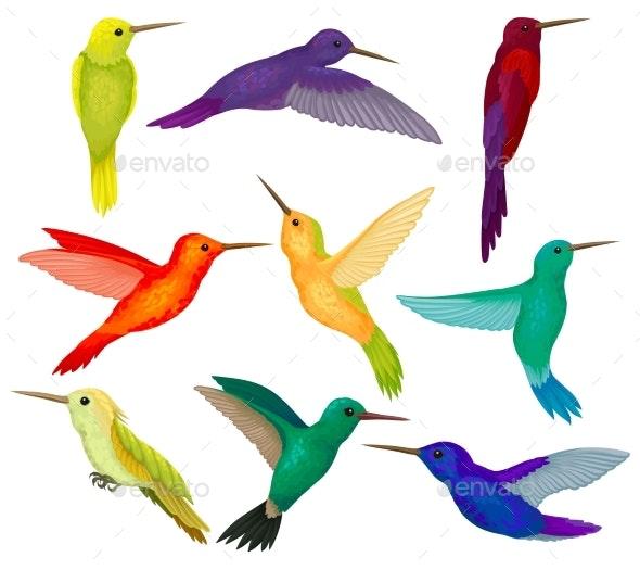 Hummingbirds Set - Animals Characters
