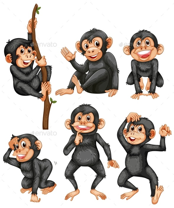 Set of Apes on White Background - Animals Characters