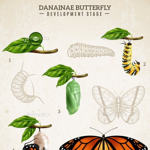 Danainae Butterfly Retro Poster