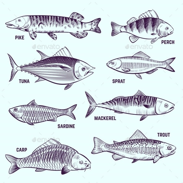 Hand Drawn Fishes - Animals Characters