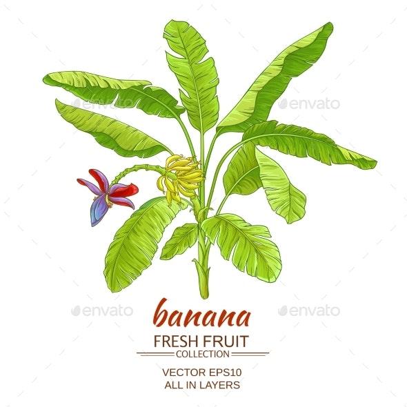 Banana  Tree Vector Illustration - Food Objects